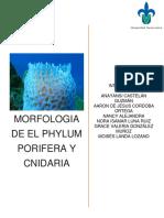 Practica Poriferos y Cnidarios