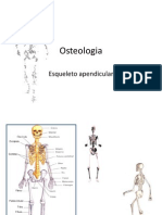 Osteologia-esqueleto+apendicular