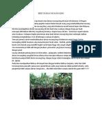 WA*082-220-228-118, durian musang king pontianak, bibit durian musang king di riau