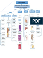 Sistema Osteomuscular