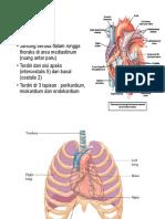 anatomi fisiologi fungsi.ppt