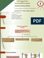 quirurgica 5.pptx