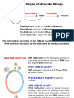 4. Replication and Transcription