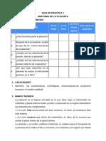 Guía de Practica 1