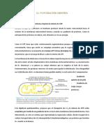 12. Fosforilación oxidativa