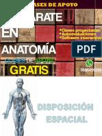 Anatomia n°1-1 craneo y cara