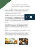 Hongos y Bacterias en El Ambito Industrial y Como Descomponedores de Materia Organica