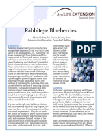 Blueberries Texas