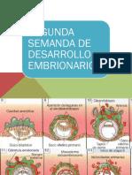 Segunda Semana de Desarrollo Embriolnal