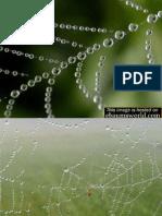 COOL RAIN SPIDER WEB COOL