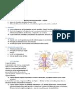Medula Espinal Anatomia Funcion Estructura