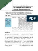 Aislamiento y Caracterización de Bacterias Celuloliíticas Obtendias de Rizosfera de Adonidia Merrillii
