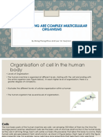 Human Being Are Complex Multicellular Organisms