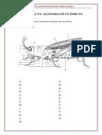 Anatomí bichos