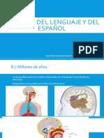 Orígenes Del Lenguaje y Del Español