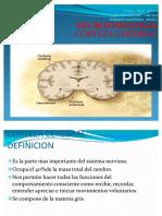 Corteza-Cerebral dos.pdf