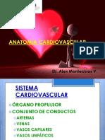 Anato Fisio Ecg