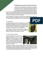 Los Siete Animales Endémicos Del Perú en Peligro de Extinción