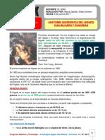 Anatomia de HigadoViasBiliares YPancreas