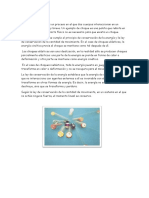 MARCO TEORICO N10.docx
