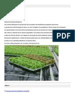 Cultivo de Lechugs Hidroponicas en Invernadero.pdf