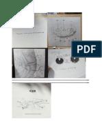 anatomymarathon review .docx