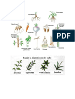 tipos de hojas según el tallo