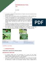 Plagas y Enfermedades Del Frijol