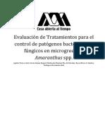 Evaluación de Tratamientos para el control de patógenos bacterianos y fúngicos en microgreen de Amaranthus spp.