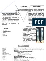 Bgano2 Relatorio Extraccao Dna Celula Eucariotica Ana Pinto