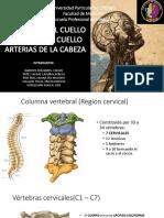 Seminario 1 Unidad - 1 Neuroanatomía