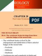 283 Nervous System