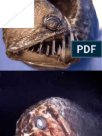 10 Horrible Deep Sea Creatures
