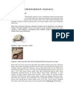 SCABIES Malay Dr Sabeera Final.pdf
