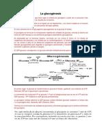 Glucogenesis y Glucolisis Docx