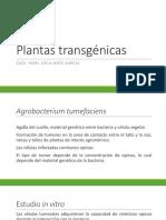2.1 Plantas transgénicas2