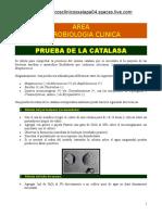 8705261 Prueba de La Catalasa