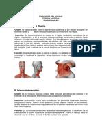 60515131 Musculos Del Cuello
