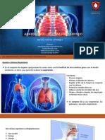 Actividad 5. Anatomía Del Sistema Respiratorio..