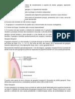 O periodonto consiste em tecidos de recobrimento e suporte do dente (Salvo Automaticamente).docx