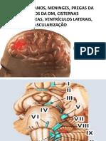 Meninges, Nervos, Vascularização,Seios Da Dm, Cisternas