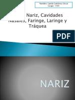 2.1.1 Nariz,Cavidades Nasales, Faringe. Laringe, Tráquea