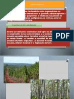 suelos forestales.....