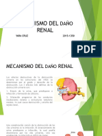 Mecanismo Del Daño Renal