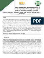 Artículo Final - Rhizobium Sp. y Hongos en El Suelo de Huachipa