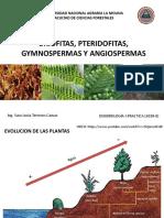 1.Caracteristicas Fundamentales Briofitas, Pteridofitas,, Gymnospermas, Angiospermas_DENDROLOGIA I - PARTE I