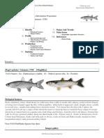 FAO Fisheries & Aquaculture - Cultured Aquatic Species Information Programme - Mugil Cephalus (Linnaeus, 1758)