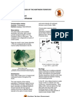 Threatenend Species of the NT - Olive Ridley turtle.... by Parks and Wildlife Commission Northern Territory