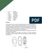 Parasitología tarea