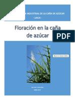 Floración en La Caña de Azúcar_2204092628